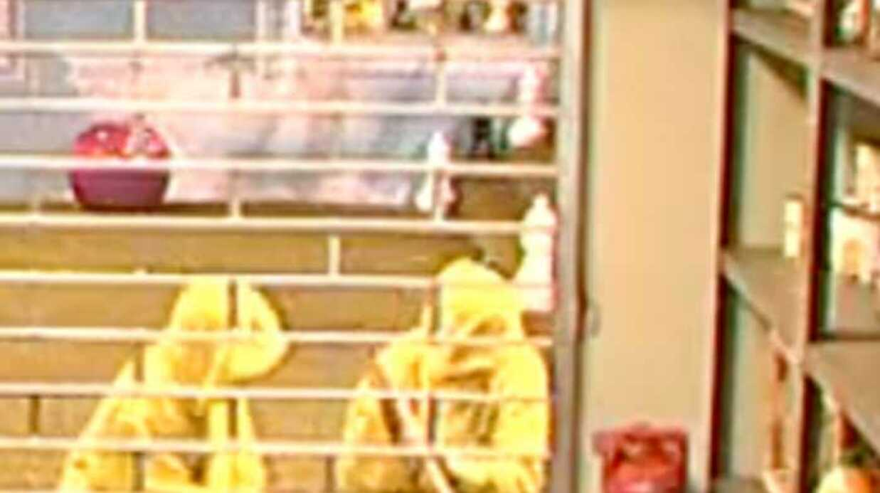 VIDEO Secret Story 3: des cambrioleurs dans la maison