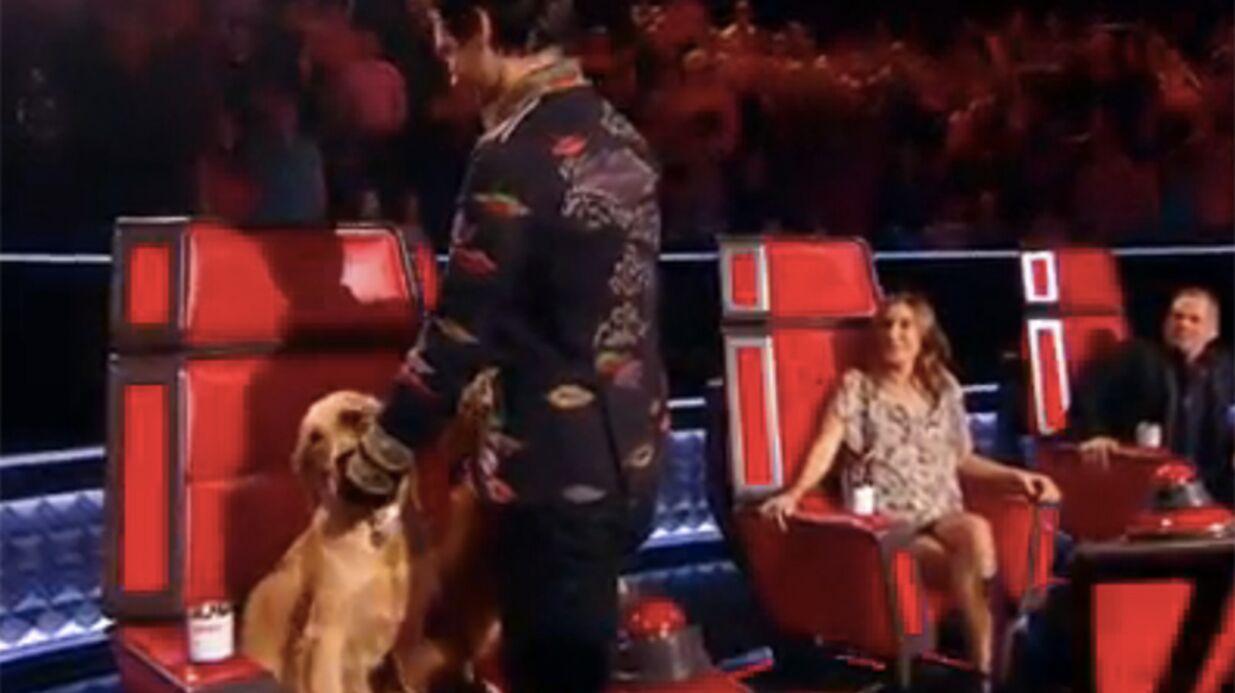 VIDEO The Voice: Mika fait venir ses deux chiens sur le plateau!