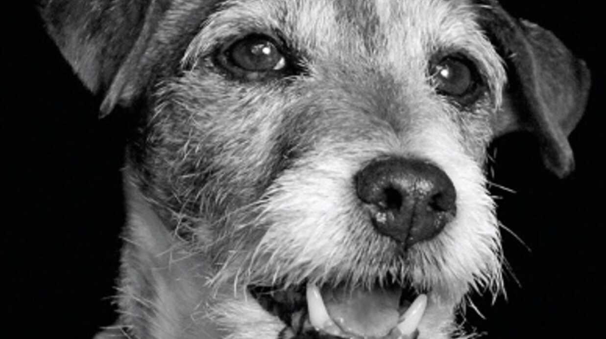 Uggie, le chien de The Artist, invité d'Obama