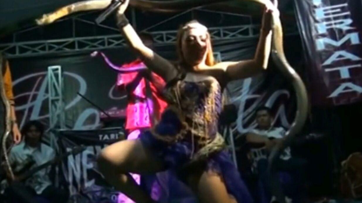 Mordue sur scène par un cobra, une chanteuse indonésienne de 29 ans meurt empoisonnée