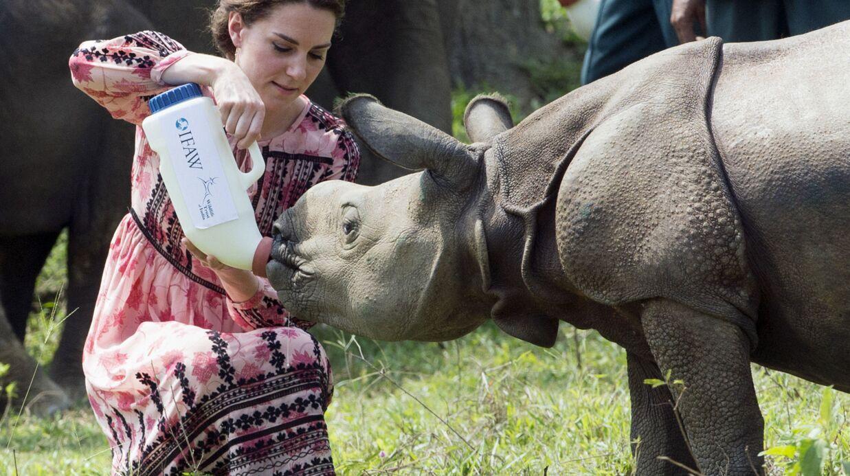 PHOTOS L'instant mignon: Kate Middleton nourrit un bébé rhinocéros et un éléphanteau