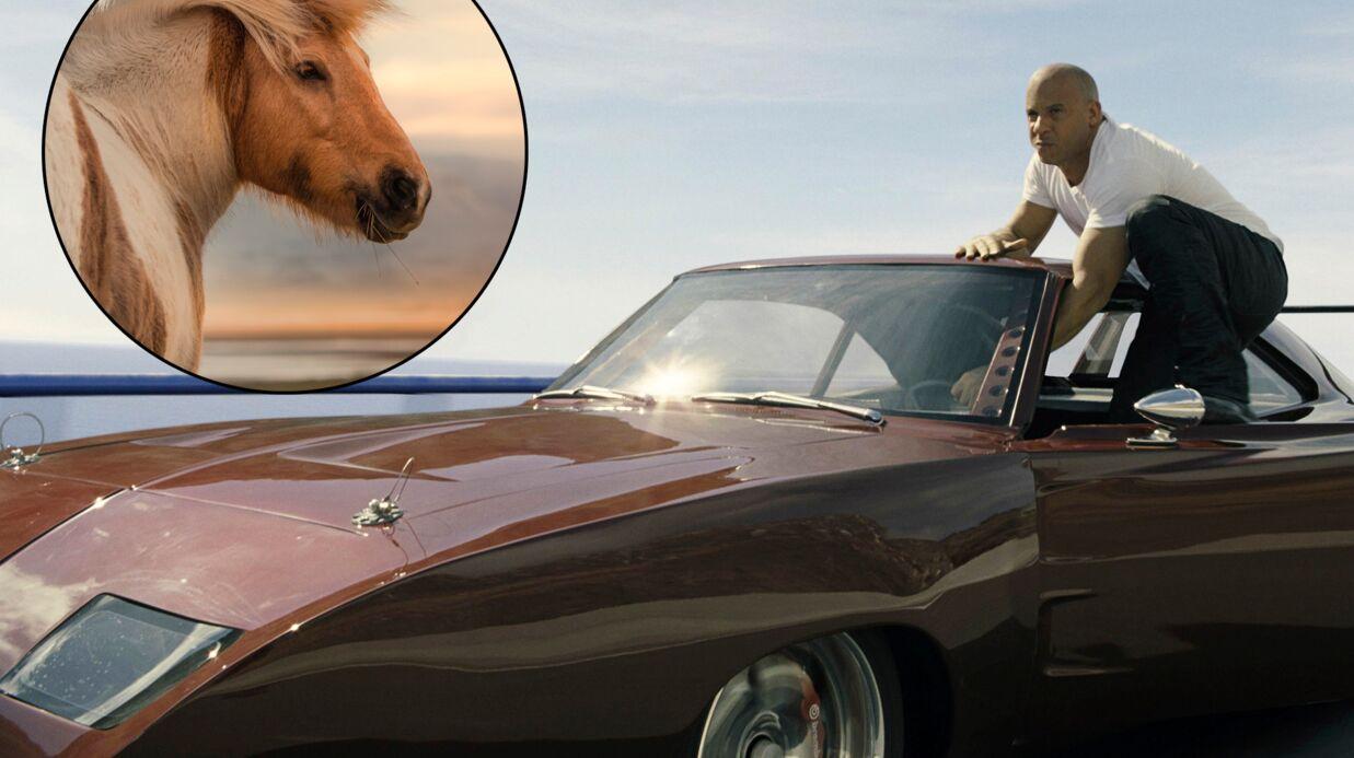 Fast & Furious 8: un cheval meurt en marge du tournage, percuté par un iceberg volant