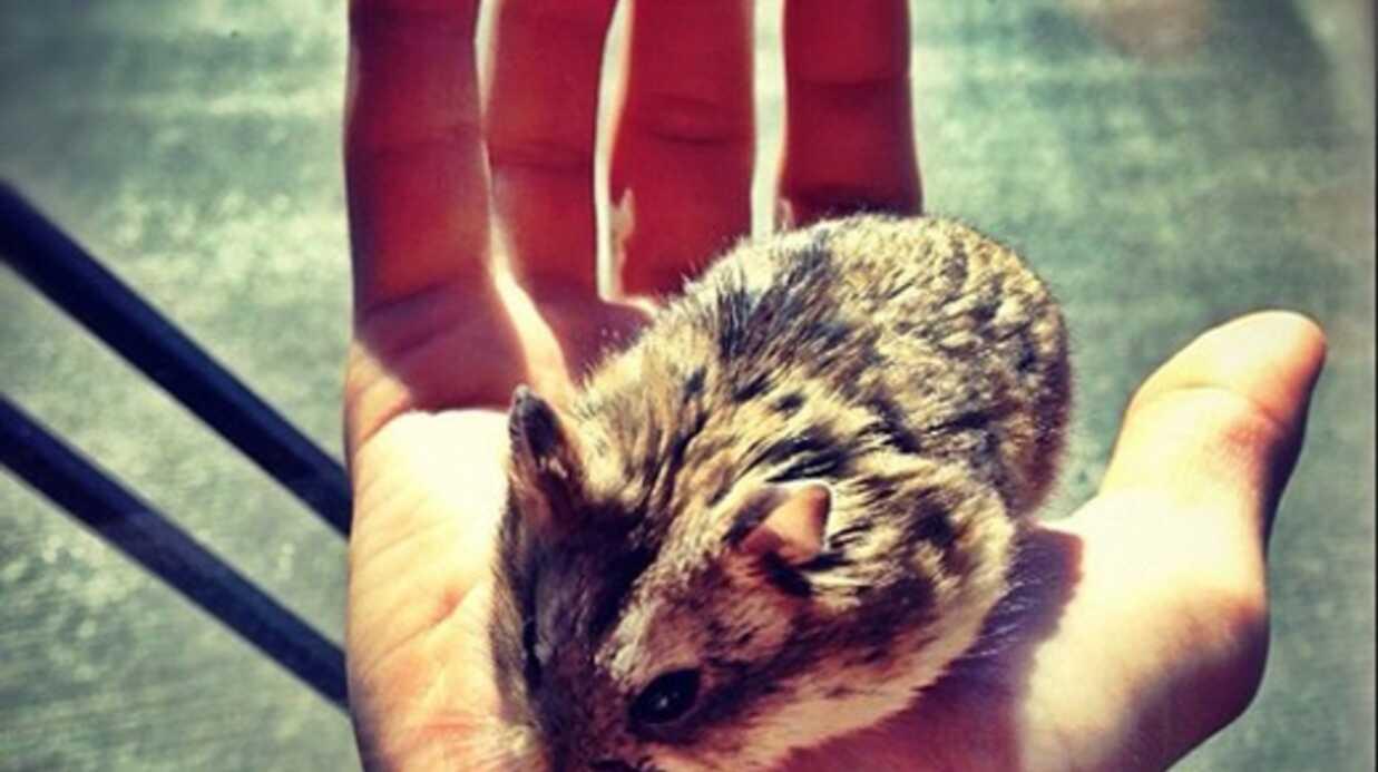 Justin Bieber abandonne son hamster à une inconnue