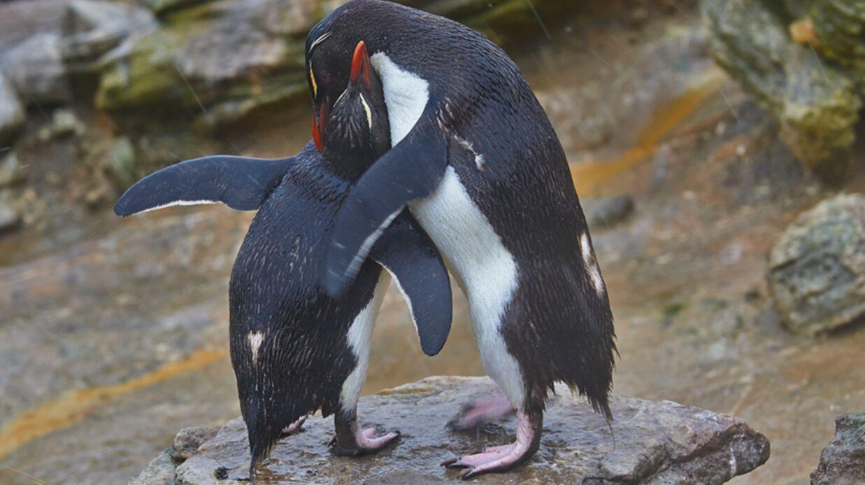 Le Pingouin de Carla Bruni fait rire François Hollande