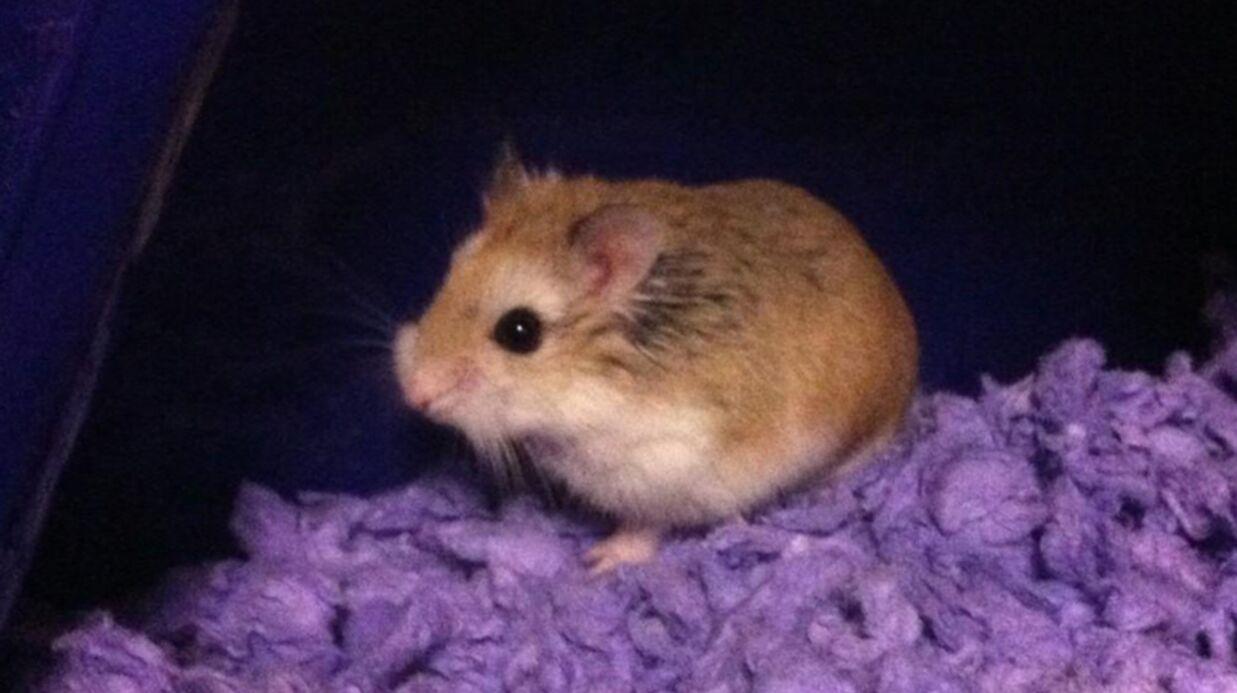 Justin Bieber accusé d'avoir condamné à mort son hamster
