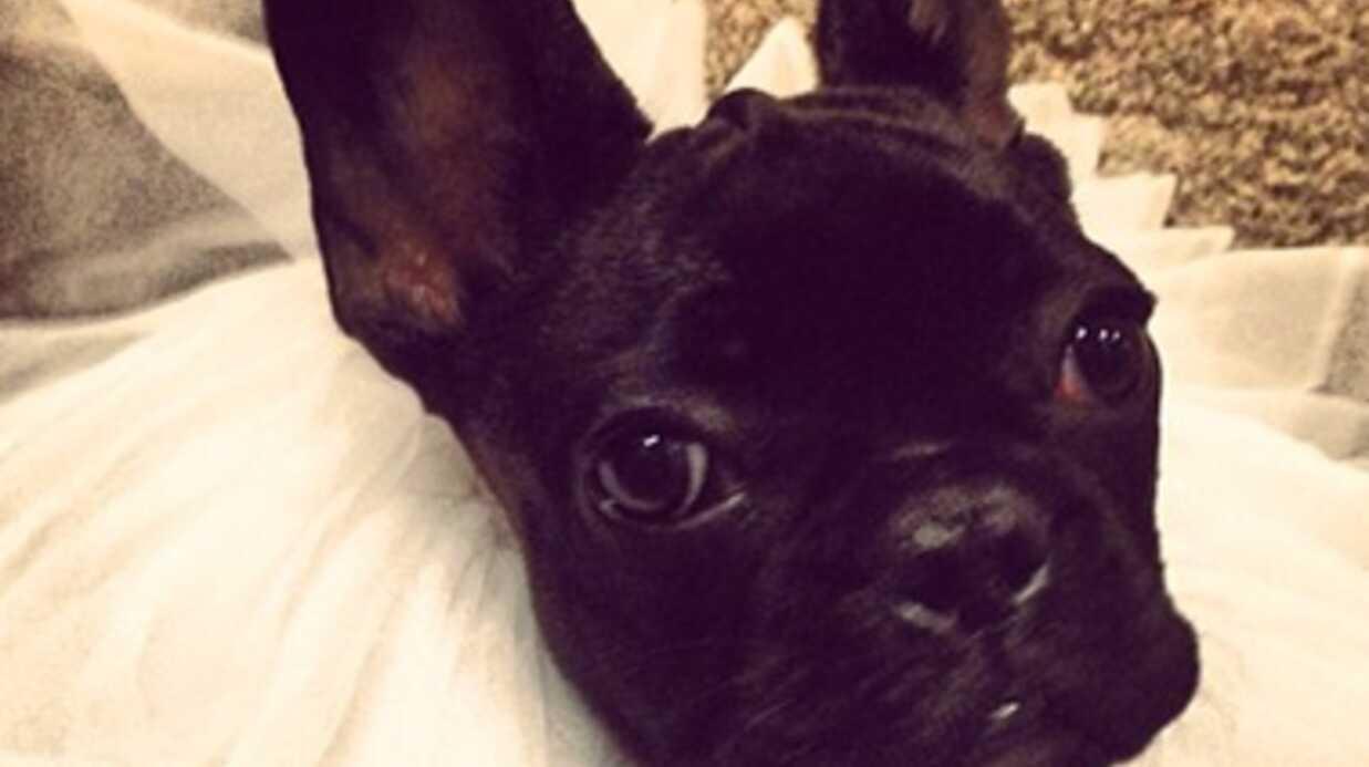 PHOTOS Lady Gaga vivement critiquée pour avoir travesti ses chiens