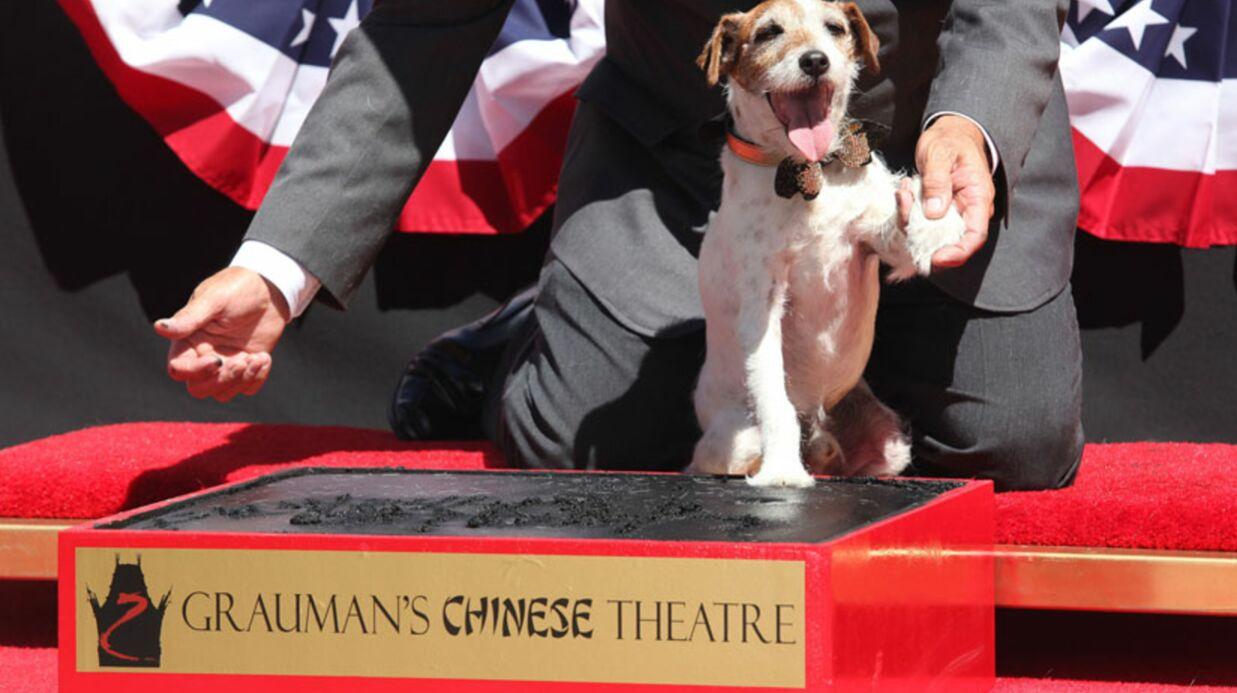 PHOTOS The Artist: le chien Uggie laisse ses empreintes à Hollywood