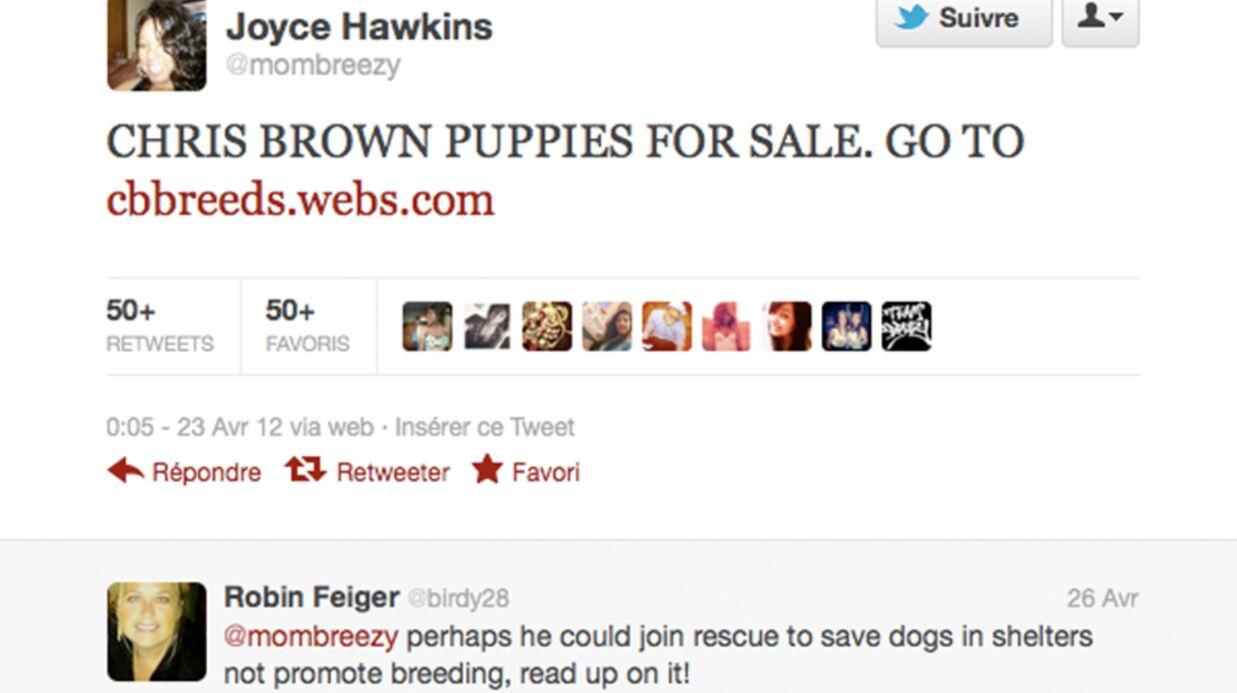 Chris Brown: un business de chiots qui fait scandale