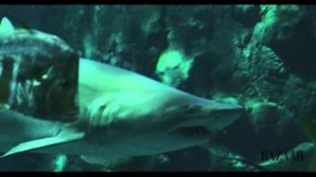 VIDEO Rihanna sexy, même en nageant avec un requin!