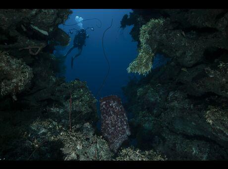 Au Honduras, côté mer. Passion Caraïbes