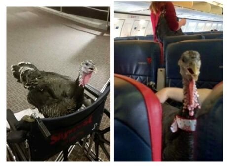 Transport  Pour embarquer sur un vol Delta Airlines, les animaux devront désormais montrer patte blanche